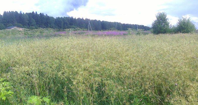 Как получить земельный участок в Ленинградской области